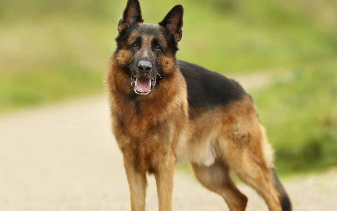 Ask a Polygraph Examiner in Bradford about a Dangerous Dog